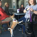 A Step Above Assisting Beau's Wish Pet Rescue
