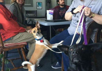 Beau's Wish Pet Rescue